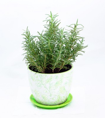 plants live plant herb garden Hong Kong Home Essentials HK